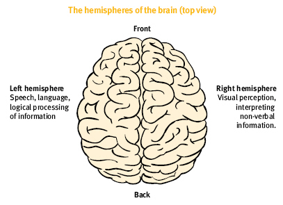 Consumer training and support project this diagram depict a top view of the brain the location and name of the ccuart Choice Image